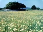 笠岡の花-2