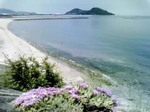 笠岡の花-3